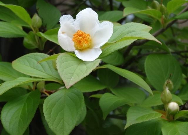6月の花2.jpg