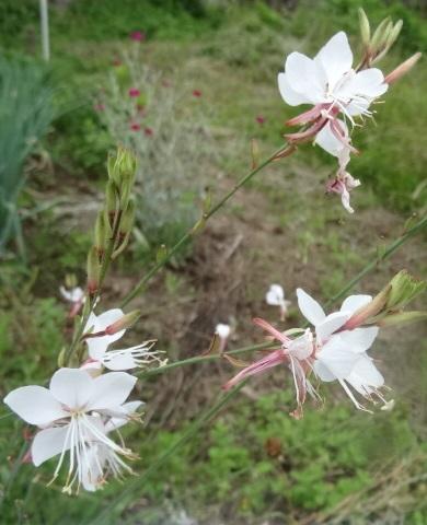 6月の花4.jpg