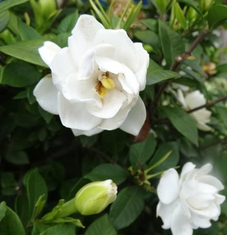 6月の花8.jpg