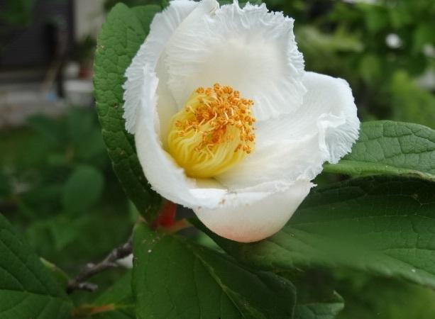 6月の花9.jpg
