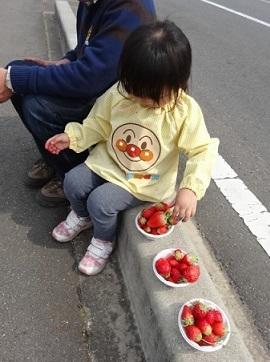 イチゴ狩り4.jpg