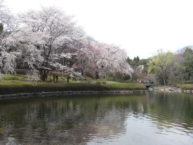 中央公園3.jpg