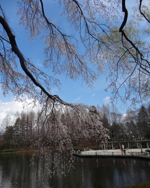 中央公園5.jpg