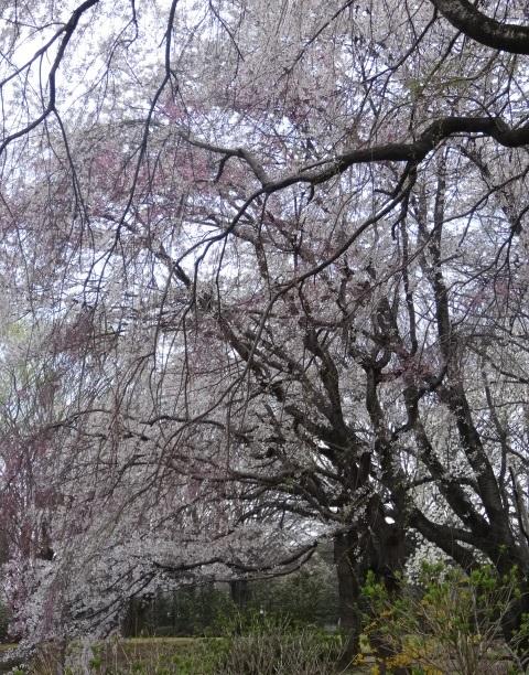 中央公園7.jpg