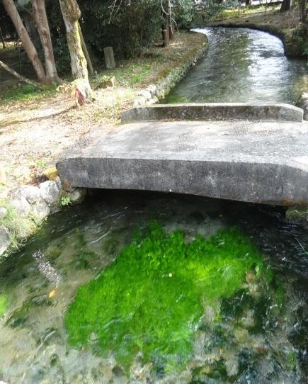 乃木神社2.jpg