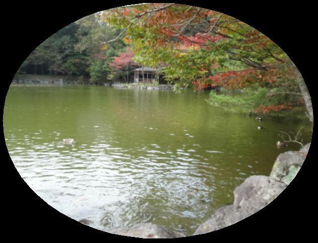 乃木神社7.jpg