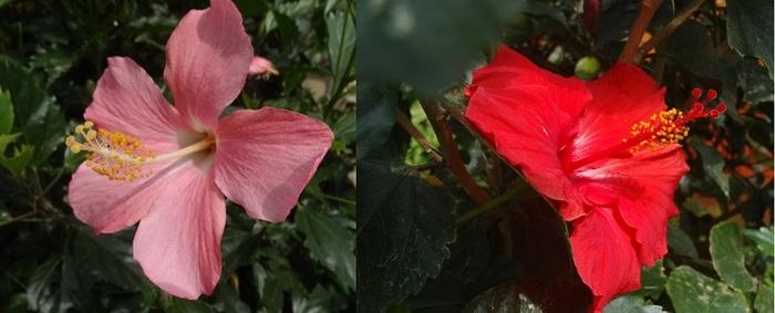 宮古島植物園9.jpg