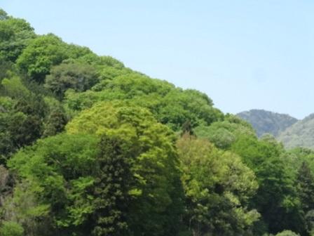 巴波川10.jpg