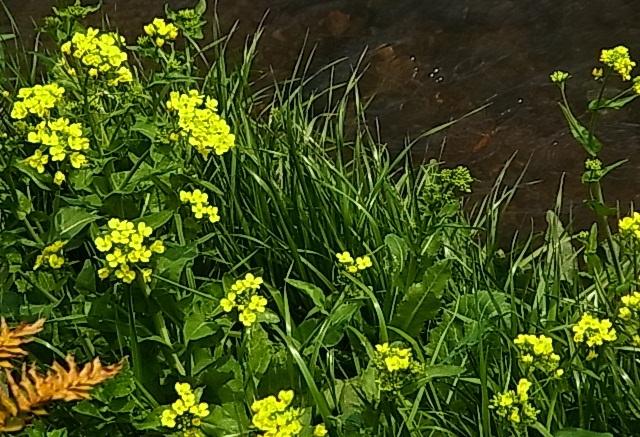 春の小川2.jpg