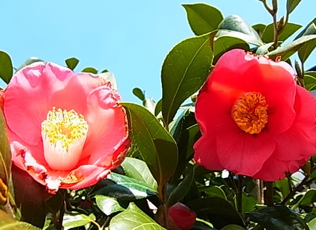 春の小川5.jpg