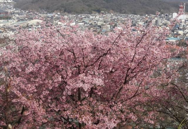 織姫神社10.jpg