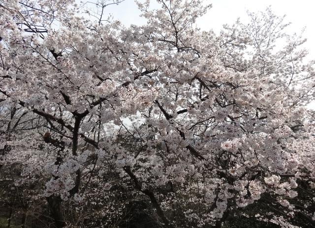 織姫神社11.jpg