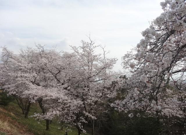織姫神社12.jpg