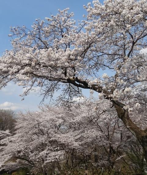 織姫神社2.jpg