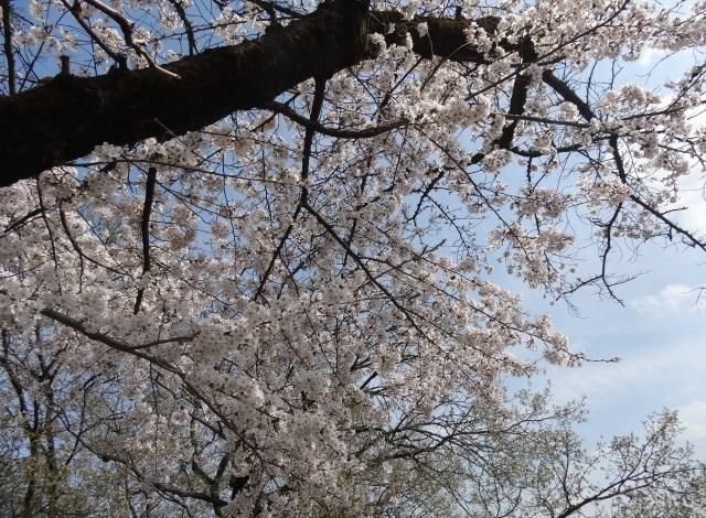 織姫神社3.jpg