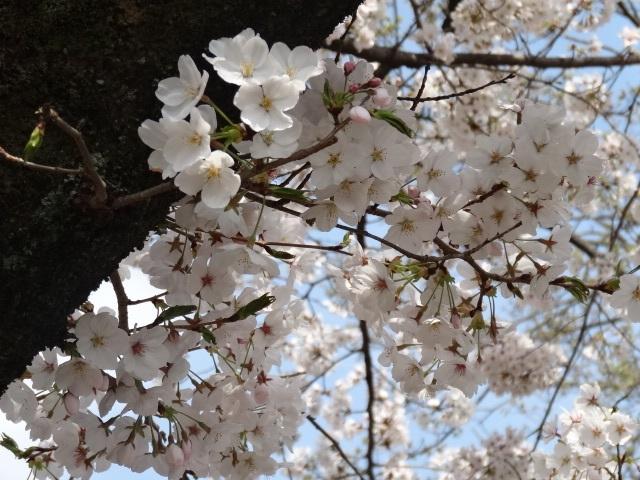 織姫神社4.jpg