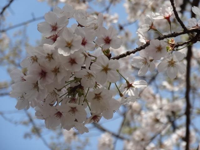 織姫神社5.jpg