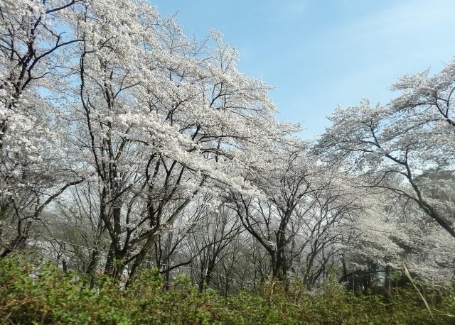 織姫神社8.jpg