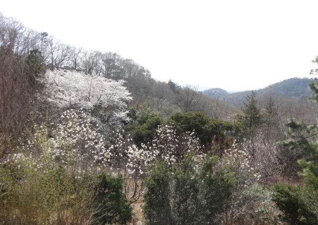 織姫神社9.jpg