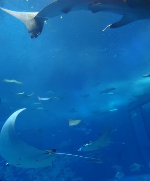 美ら海水族館12.jpg