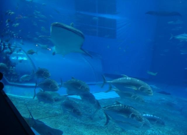 美ら海水族館15.jpg