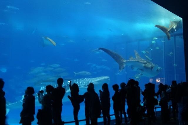 美ら海水族館9.jpg