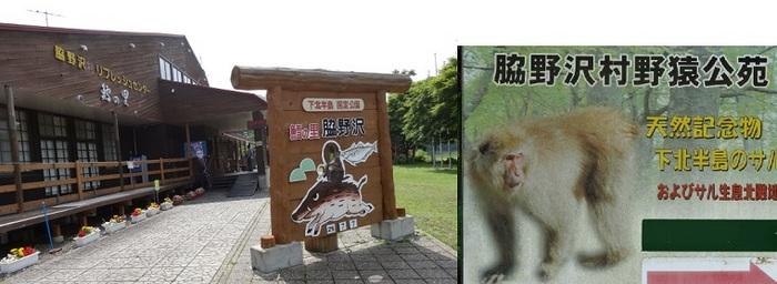 脇野沢のサル4.jpg