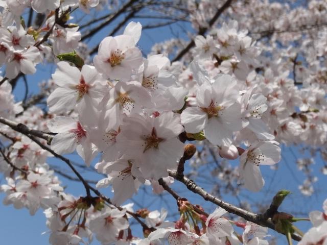 花の山13.jpg