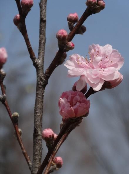 花の山17.jpg