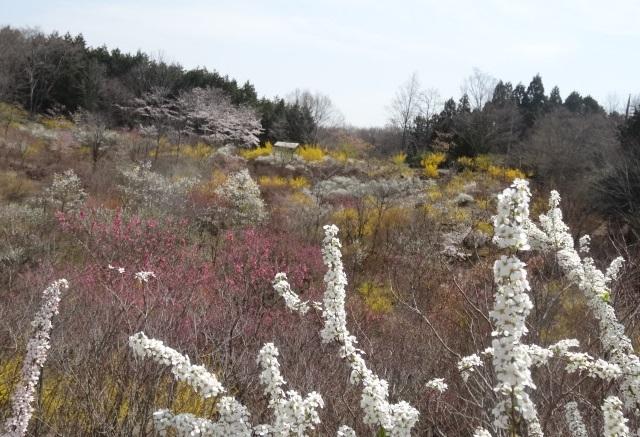 花の山2.jpg
