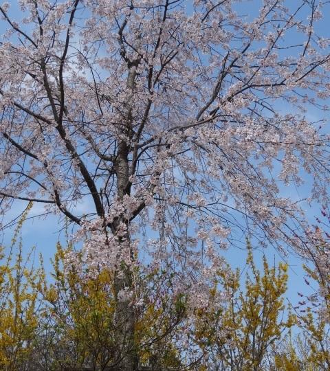 花の山5.jpg
