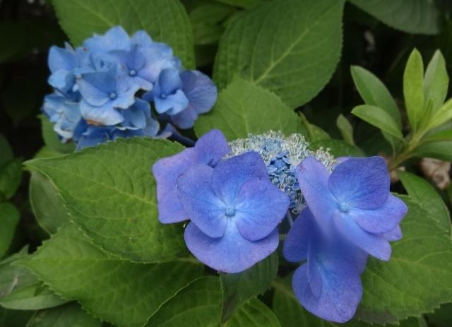 6月の花0.jpg