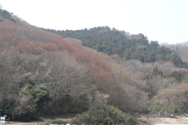 のお彼岸7.jpg