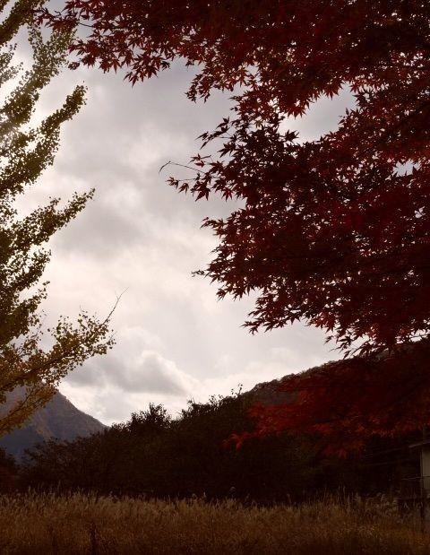 もくりん紅葉7.jpg
