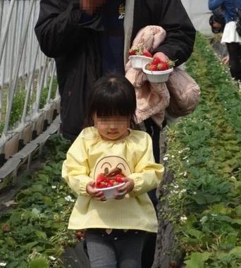 イチゴ狩り9.jpg