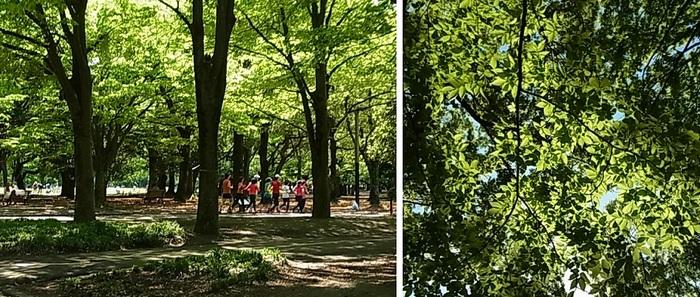 代々木公園3.jpg