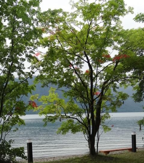 十和田湖10.jpg