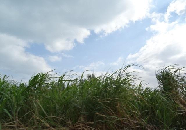 古宇利島11.jpg