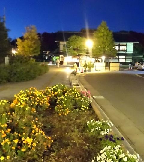 夜の散歩2.jpg