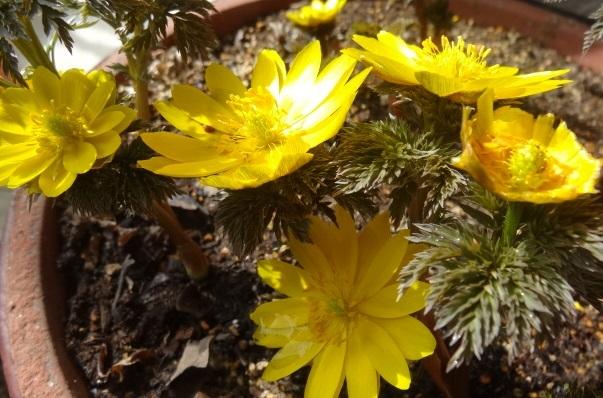 家の庭に咲く花4.jpg