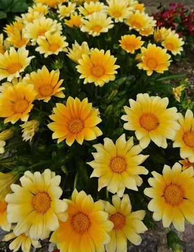 家の花3.jpg
