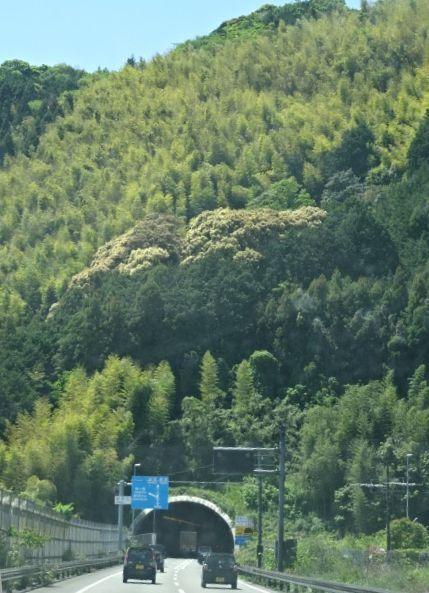 富士9.jpg