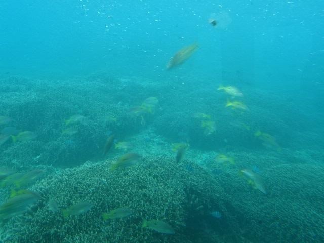 水中5.jpg
