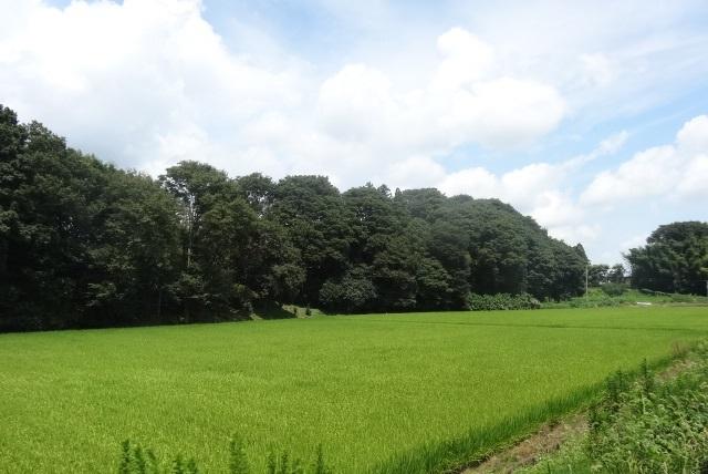 真岡鉄道5.jpg