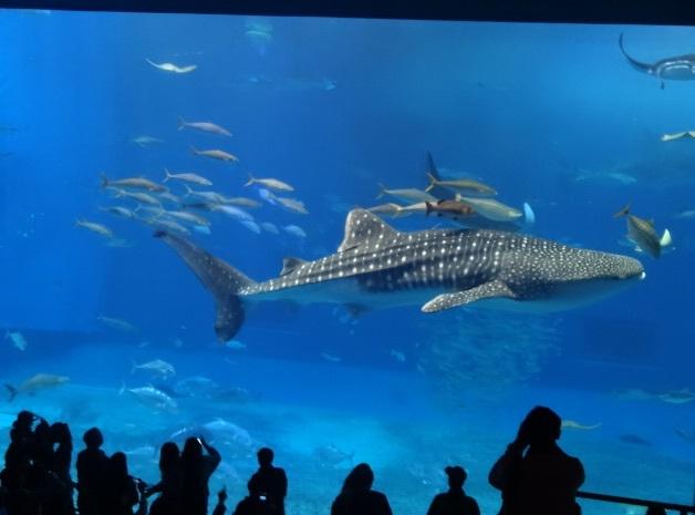 美ら海水族館10.jpg