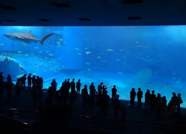 美ら海水族館11.jpg