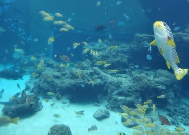 美ら海水族館6.jpg