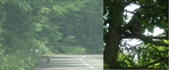 脇野沢のサル9.jpg