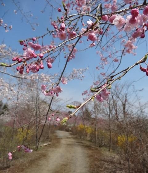 花の山10.jpg