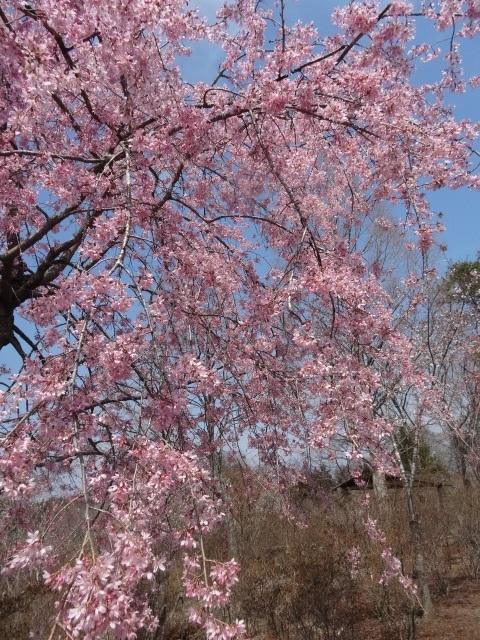 花の山11.jpg